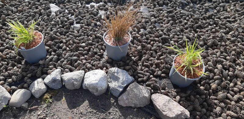 Rośliny szumiące do ogrodu